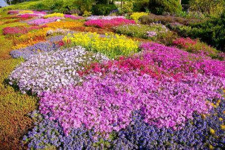 Почвопокровные и луковичные цветы