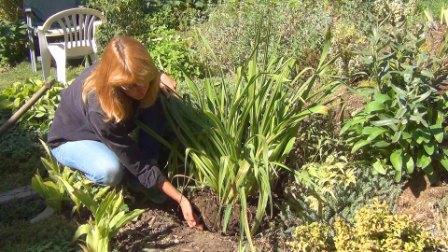 Какие работы проводят в огороде в сентябре