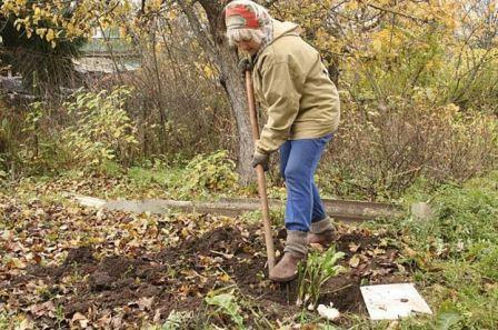 Работы в огороде в сентябре и октябре
