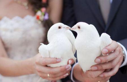 Белые свадебные голуби, приметы