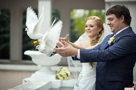 Голубе на свадьбе, приметы