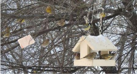 Чем подкармливать птиц зимой