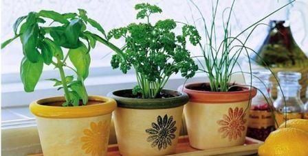 Как вырасти зелень на подоконнике