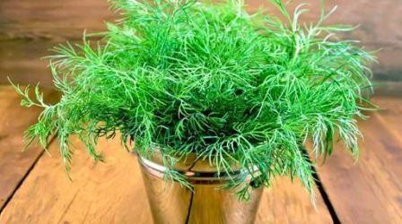Как вырастить зелень на подоконнике в квартире