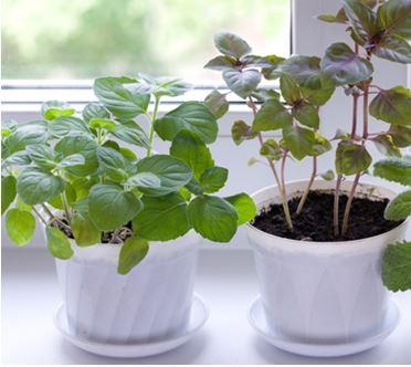 Как посадить зелень на подоконнике