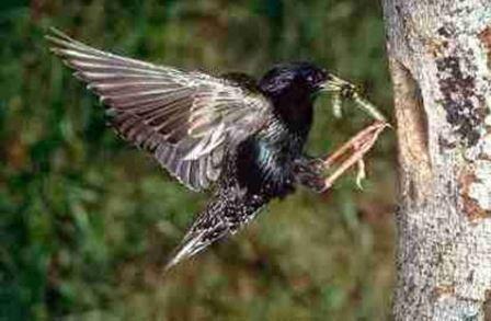Как правильно подкармливать птиц зимой