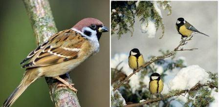 Чем подкармливать птиц зимой: советы орнитолога