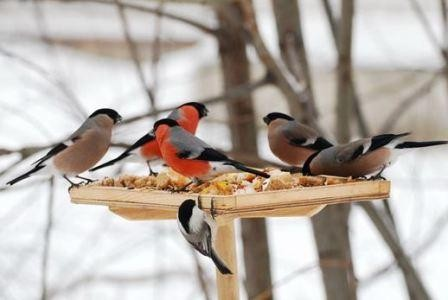 Чем подкормить птиц зимой в кормушке