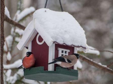 Чем и как лучше подкармливать птиц зимой