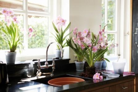 Выбор домашних растений