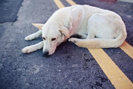 Собака на дороге: примета