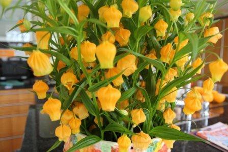 Сандерсония оранжевая золотой ландыш