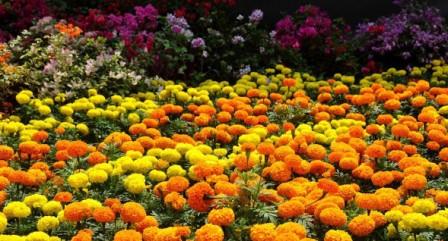 Как правильно подобрать цветы для клумбы