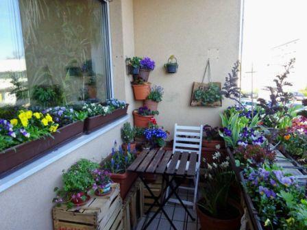 Цветы для балкона: какие выбрать