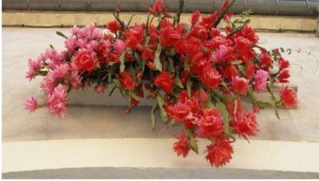 Цветок эпифиллум фото