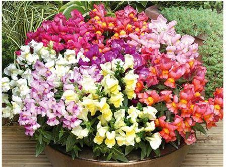 Цветы на балконе в ящиках название