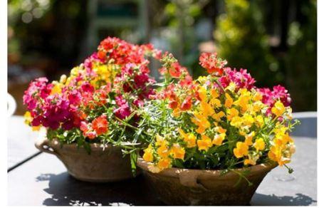 Как украсить балкон цветами