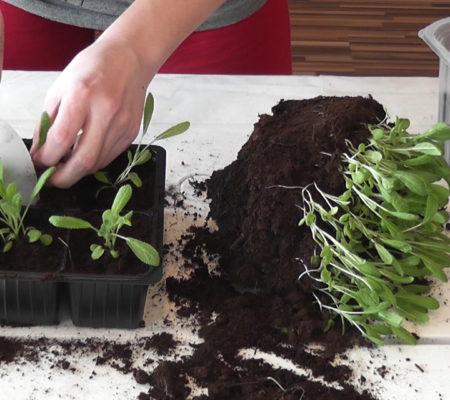 Правильная посадка семян на рассаду
