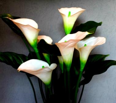 Цветы в доме: приметы фото