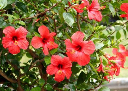 Домашние цветы: приметы фото