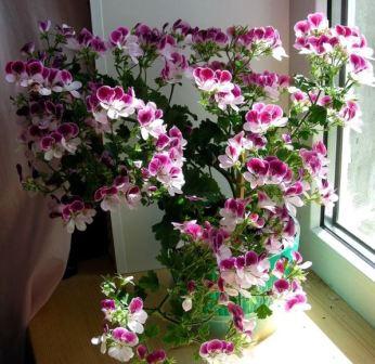 Народные приметы цветы в доме