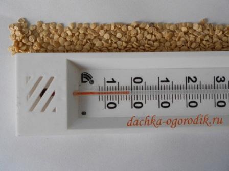Как замачивать семена перед посадкой на рассаду