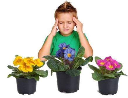 Почему погибают комнатные цветы примета