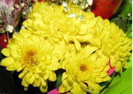 Приметы народные про цветы комнатные
