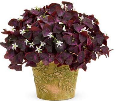 Комнатные цветы суеверия и приметы