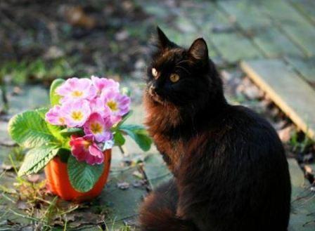 Комнатные цветы приметы