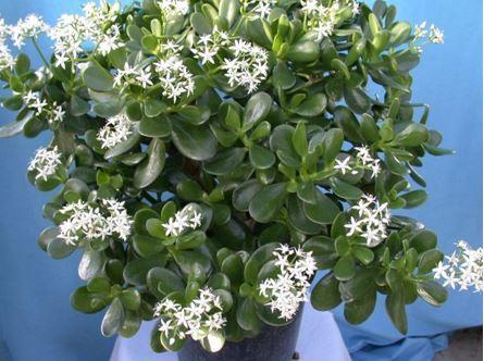 Комнатные цветы фото приметы