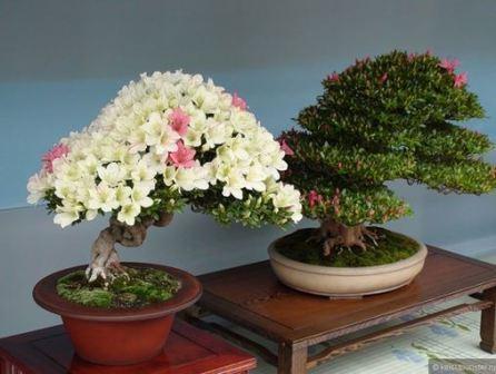 Народные приметы комнатных цветов