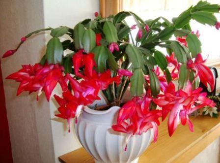 Погибают комнатные цветы приметы
