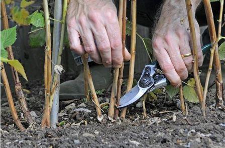 План работ весной в саду