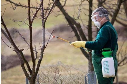 Обработка деревьев в саду весной от вредителей
