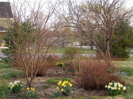 Весенние работы в саду опрыскивание деревьев препараты