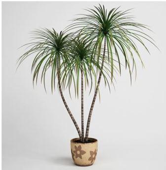 Неприхотливые комнатные растения название