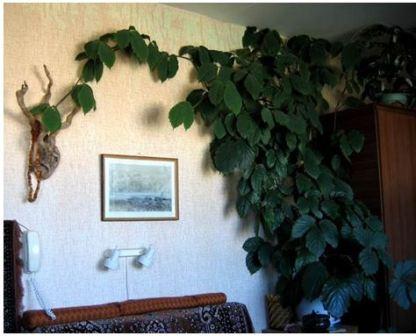 Неприхотливые комнатные цветы названия