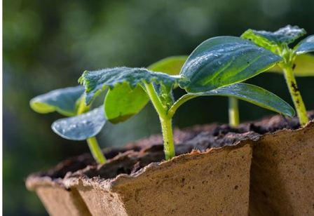Мелкие семена растений