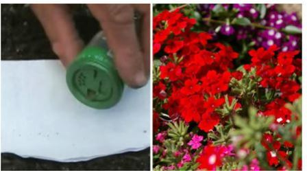 Как сеять мелкие семена