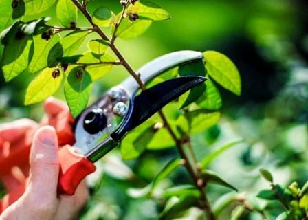 Время обрезки плодовых деревьев