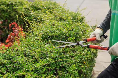 Обрезка плодовых деревьев весной как обрезать