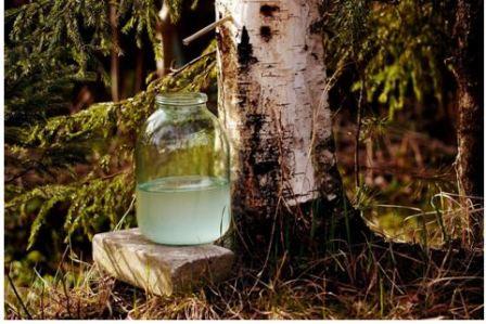 Польза березового сока для организма