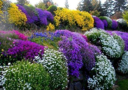 Осенняя посадка многолетних цветов