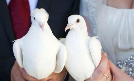 Свадебные голуби – символ вечной верности и любви