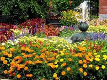 Энергетика цветов, их сочетание на клумбе
