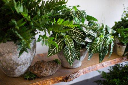 О чем говорят цветы и растения в доме