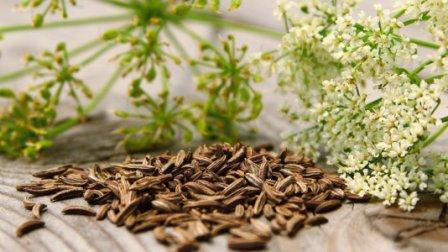 Целебные семена аниса