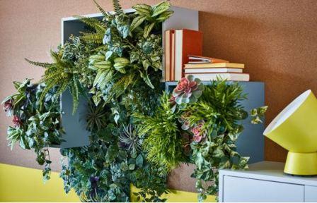 Что выбрать из неприхотливых комнатных растений