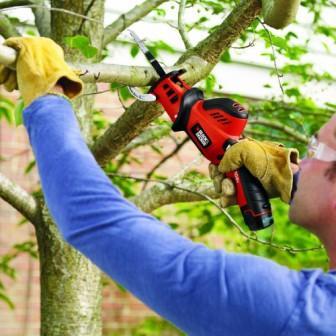 Когда и как обрезать плодовые деревья, кустарники, туи и розы